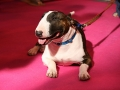 Oh My Dog photos from Crufts